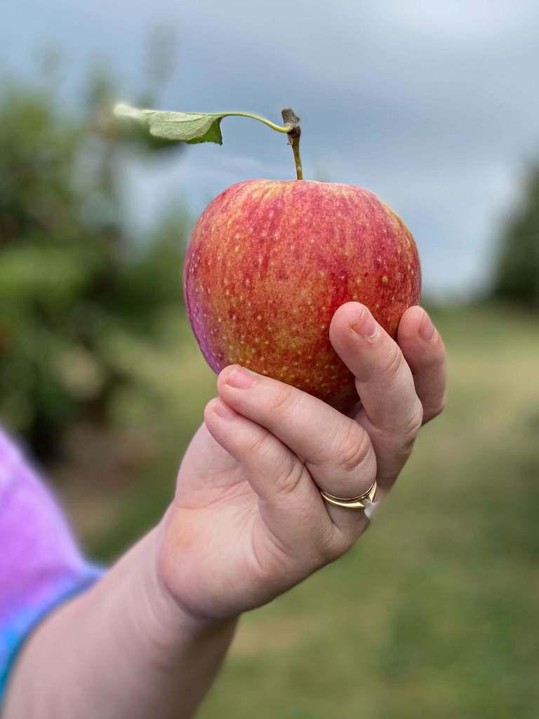 apple closeup for grandma's apple crisp
