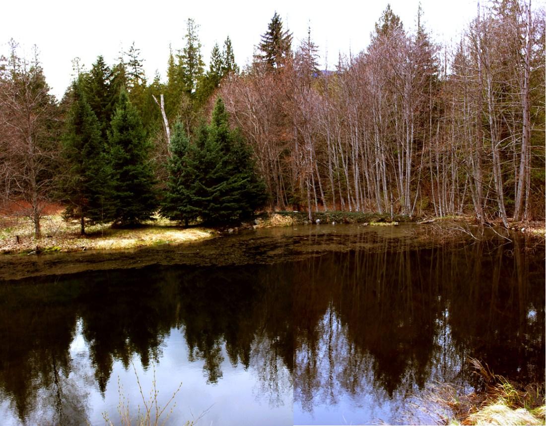 cabin pond