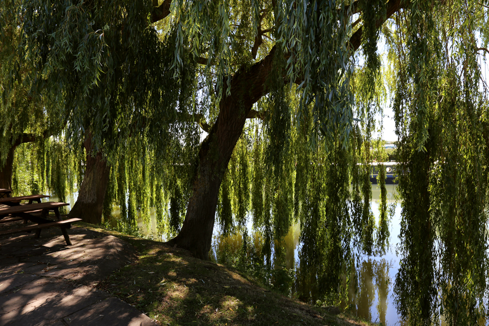 patio under willow trees by a river