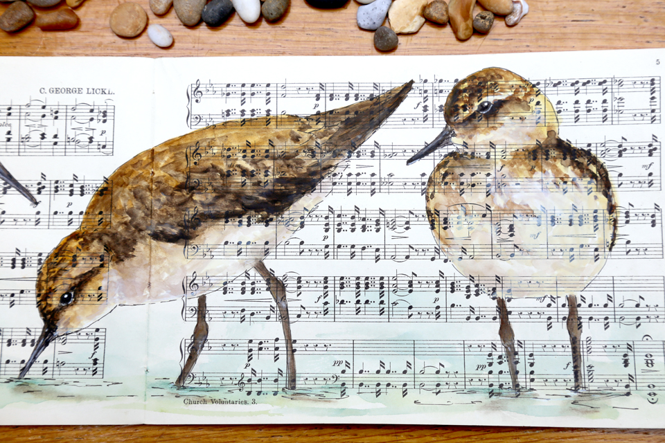 watercolour painting of sandpipers on ephemera