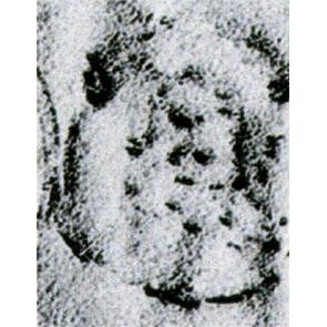 15763.jpg