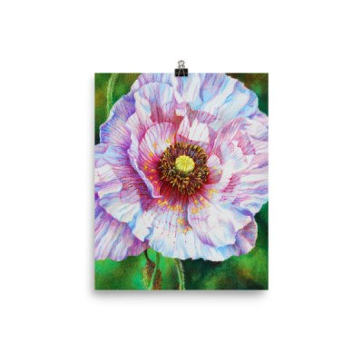 Photo paper poster: White poppy