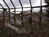 greenhouse with Kiran