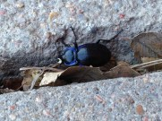 Beetle in a Sidewalk Crack