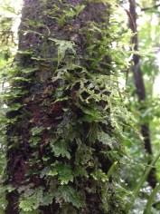 Epiphytes 1