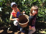 The kids were invited to pick coffee beans in the field.