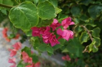 Flowers in Rockport, TX