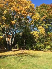 Mattituck backyard