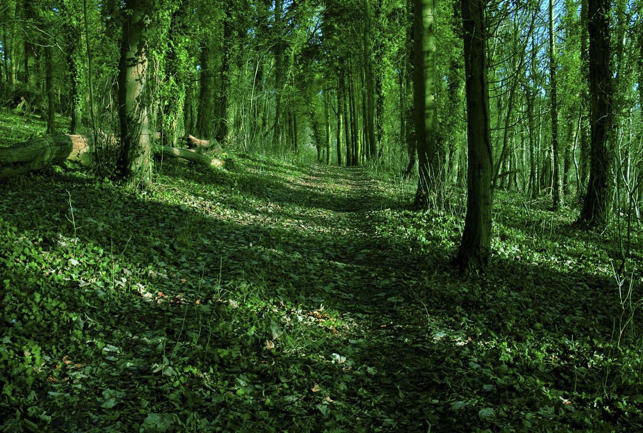 Green Wood, Veronica Wilton