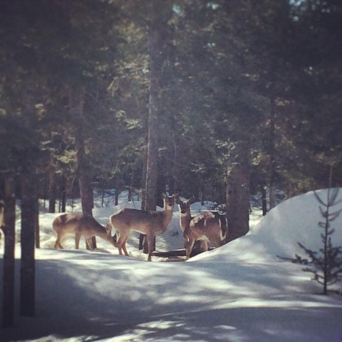 Mes voisins, l'hiver dernier