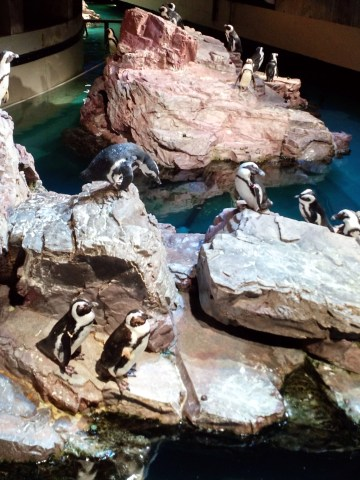 Penguins on a rock