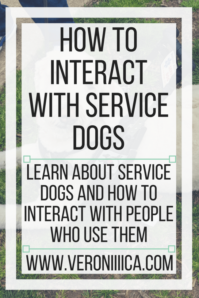How to interact with service dogs. Learn about service dogs and how to interact with people who use them
