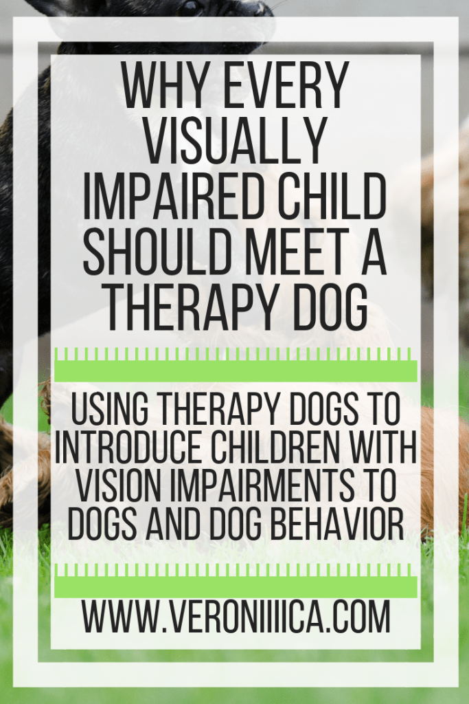 Why every visually impaired child should meet a therapy dog. Using therapy dogs to introduce children with vision impairments to dogs and dog behavior