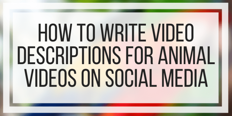 How To Write Video Descriptions For Animal Videos On Social Media