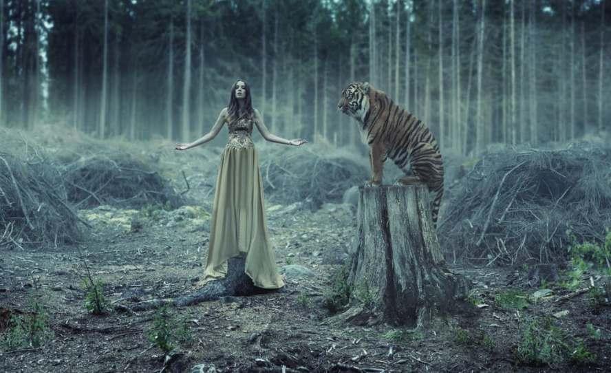 voyage chamanique - animal de pouvoir