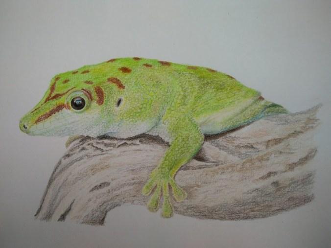 gekko kleurpotlood tekening