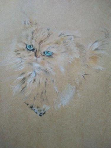 Fluffy cat 4
