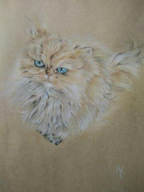 Fluffy cat 5