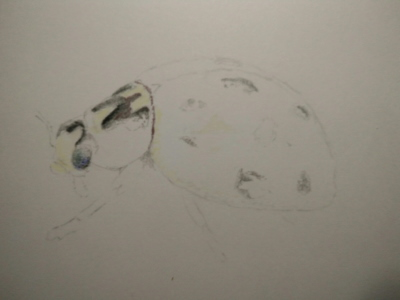 Tekening lieveheersbeestje