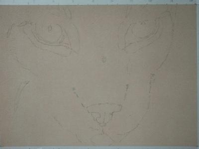 Tekening lynx 1 outline