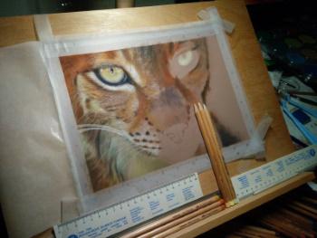 Tekening lynx 10 op ezel
