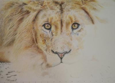 tekening leeuw drawing colour pencil