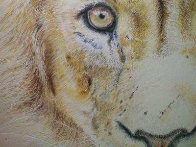 tekening leeuw