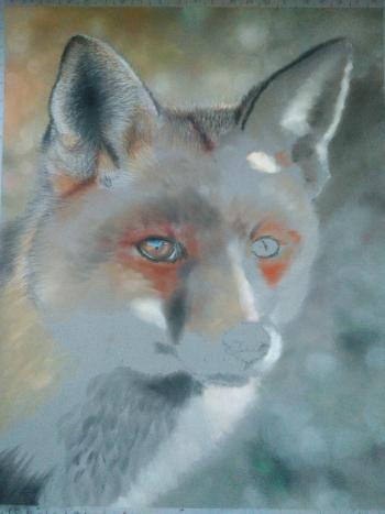 drawing fox