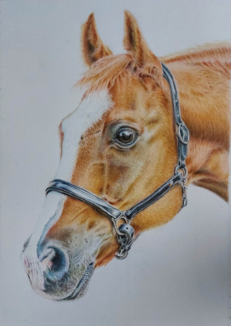 drawing horse