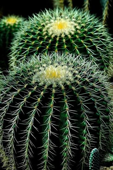 cactus-404362_1920