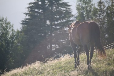 horses-1150017_640