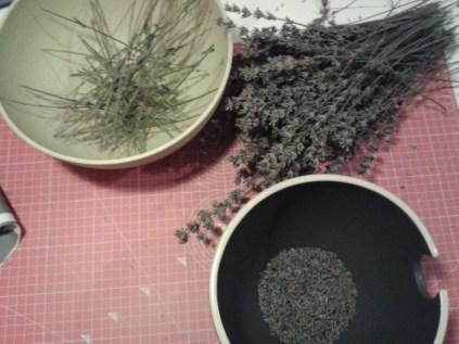getrocknete Lavendelblüten vom Stengel abreiben