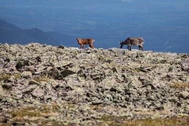 Image au Mont Jacques-Cartier pour notre article 4 sentiers pour de surprenantes rencontres en Gaspésie
