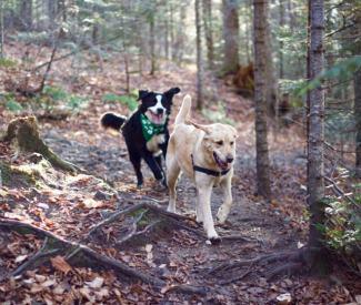Photo de Sarah à Val-David pour notre article Top 7 – Randos à faire avec votre chien - Partie 2