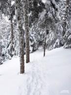 Versant_Plein-air_Mont-Gosford-hiver_LR_10