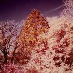 Goeselville-Grove-2__Kodak-Ektacolor-IE-135-20-e1607984134430