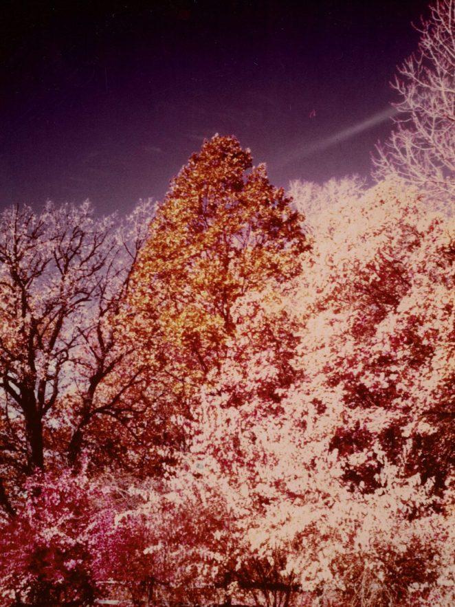 Goeselville-Grove-2__Kodak-Ektacolor-IE-135-20