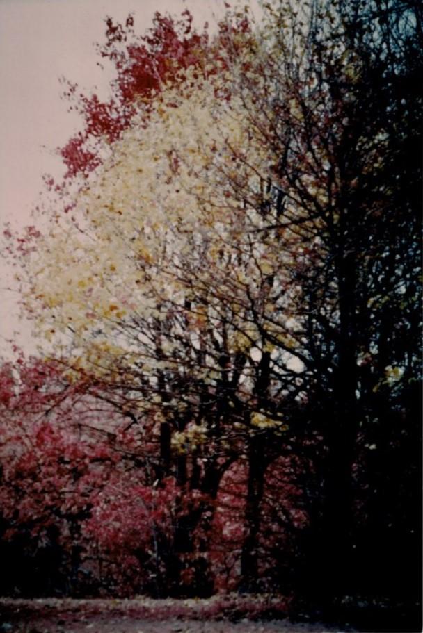 Goeselville-Grove__Kodak-Ektacolor-IE-135-20a.jpg