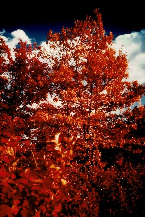 Tinley-Creek-5__Kodak-Ektacolor-IE-135-20