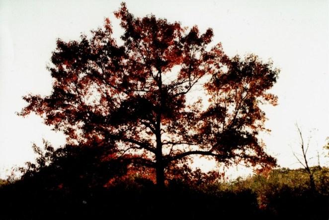 Sunset__Turtlehead Lake__Konica Color
