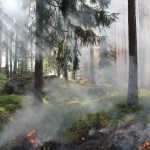 U.S. Wildfires: July 2021 Update – Latest Maps and Information