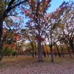 Yankee Woods Grove 1.jpg