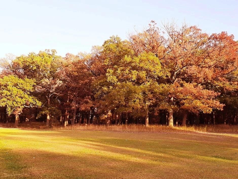Yankee Woods Grove 4.jpg