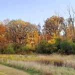 Yankee Woods Grove 7.jpg