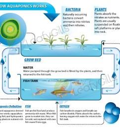 aquaponics diagram 1web [ 1000 x 954 Pixel ]