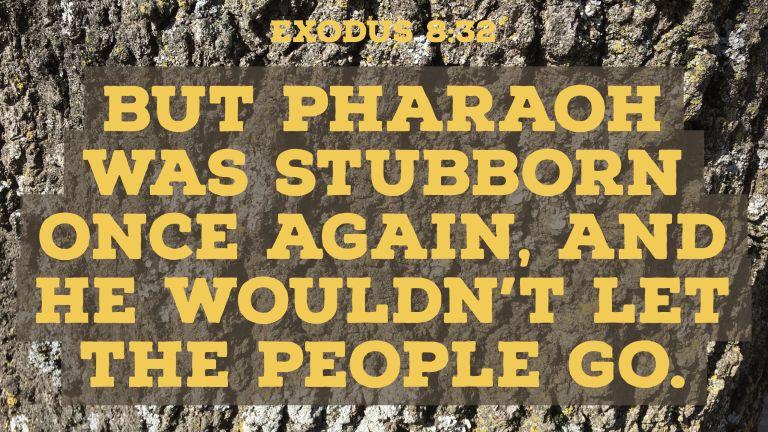 Verse Image for Exodus 8:32 - 16x9