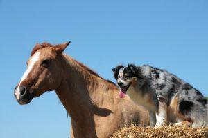 Tierhalterhaftpflichtversicherung, Tierhalterhaftpflichtversicherung