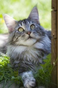 Katze kastrieren Pflicht Die Kastrationsverordnung