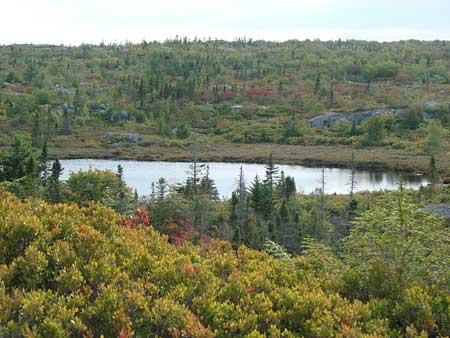 Bluff Trail Site