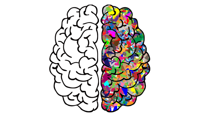 Key Differences In How Men And Womens Brains Work